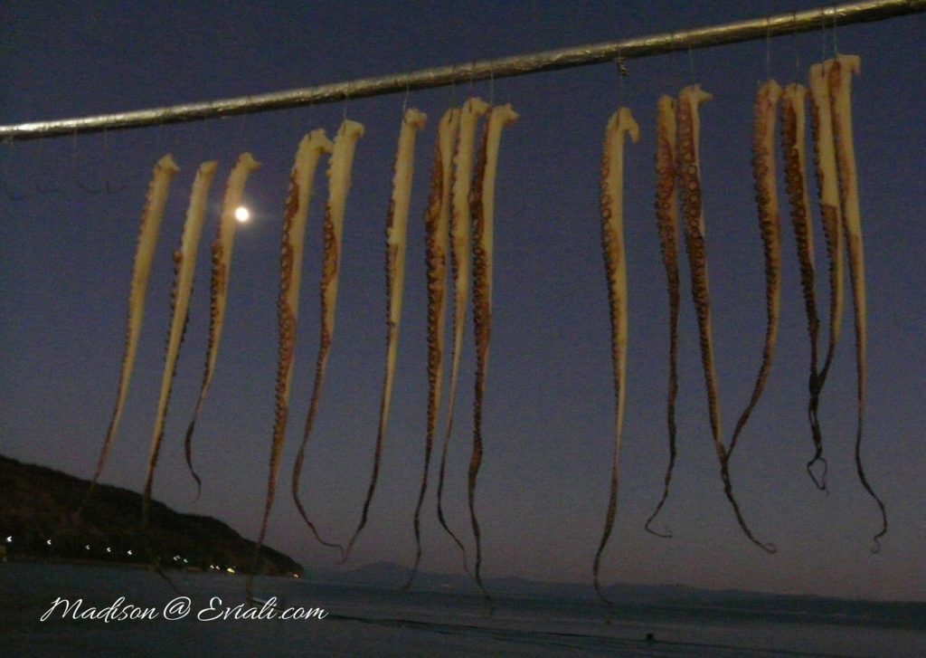Hanging Octapus Tentacles by moonlight, Limni seafront