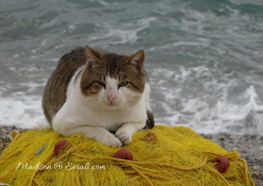 Cat sitting on fishing nets next to sea